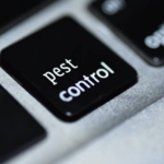 The Factors to Consider before you Choose a Pest Control Company in Charlotte