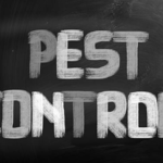 The Benefits Of Getting Services from Pest Control Company with Best Reviews Near Charlotte NC