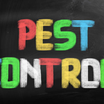 ​Everything That You Need to Know About the Top Rated Pest Control Company near Charlotte