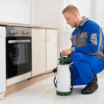 How to Choose the Best Pest Exterminators
