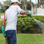 ​Benefits of the Best Pest Control Company in Wilmington Area