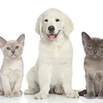 ​Guidelines on Choosing a Good Pet Supplier