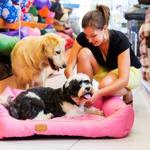 Hints of Finding Pet Supplies