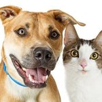 ​Points That Will Guide You When Buying Pet Supplies