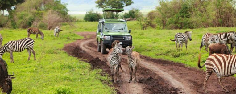 budget-safari-iStock-96773018.jpg