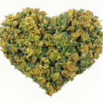 ​Tips on Cannabis Dispensaries