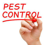 ​Factors to Consider When Hiring Pest Control Services