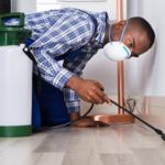 ​The Tips for Choosing the Best Pest Control Company in Charlotte