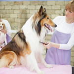 ​The Benefits of Expert Dog Grooming