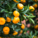 Tangy Tangerine Reviews