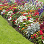 Understanding Landscape Design and Picking a Company