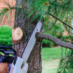 ​Tips to Consider When Selecting the Best Tree Services Company