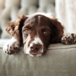 ​The Importance of Pet Booking Sites