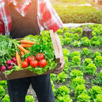 ​What to Look For In a Fresh Produce Shipping Company.