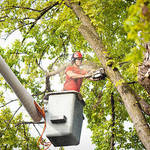 ​Factors to Consider When Choosing Suitable Trees Services