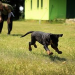 ​  How to choose an ideal Dog Training Expert