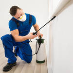 ​Reasons for Getting Termite Control Services