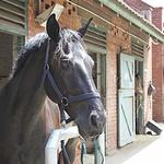 ​The Best Horse Boarding Services
