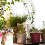 ​Getting the Best Balcony Plants