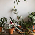 Factors To Consider When Designing a Garden