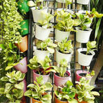 ​Benefits of Growing Plants Vertically