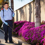 ​Importance Of Professional Pest Management
