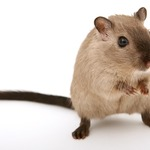 ​Tips on Getting the Best Bed Bug Removal, Commercial Pest Control, or Mice Removal