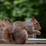 ​The Signs That Help Affirm Rodent Infestation