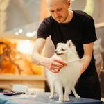 The Things to Consider before Choosing a Pet Grooming Service Provider