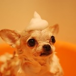 How to Get a Good Pet Grooming Company