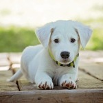 What to Look into When Opting for a Pet Grooming Service