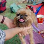 Ways to Look for the Best and the Right Pet Grooming Shop