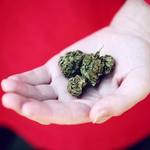 Factors to Consider When Choosing the Best Cannabis Dispensary