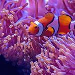 How to Build a Complete Aquarium Eco System