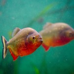 Considerations to Make When Looking for the Best Aquarium Supplies to Purchase