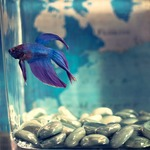 Vital Things to Note When Buying Aquarium Supplies