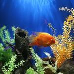 Importance Of Buying Aquarium Accessories Online